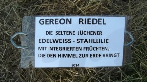 GR_Stahllilie_Text2014